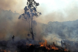 Slash and burning forest for farmland in Madagascar